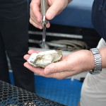 Eating fresh oysters, Eyre Peninsula, South Australia
