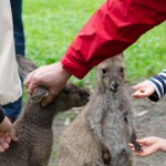 Meet the wildlife at Woodstock Estate, McLaren Vale, South Australia
