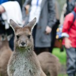 Meet the wildlife at Woodstock Estate, McLaren Vale, South Australia2