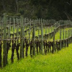 The Lane Vineyard, Adelaide Hills