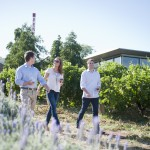 Walking through vineyards at Penfolds Magill Estate, Adelaide, South Australia 5